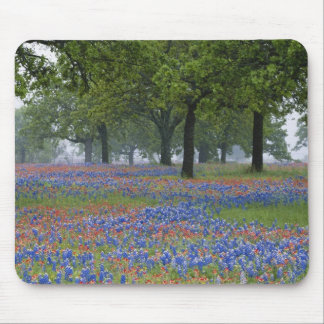 Texas, Texas Hill Country, Texas Paintbrush and Mouse Pad