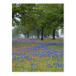 Texas, Texas Hill Country, Texas Paintbrush and Postcard