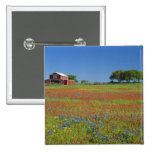 Texas, Texas Hill Country, Texas paintbrush Pinback Button