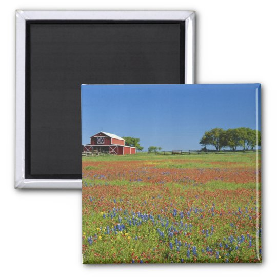 Texas, Texas Hill Country, Texas paintbrush Magnet