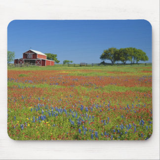 Texas, Texas Hill Country, Texas paintbrush Mouse Pad