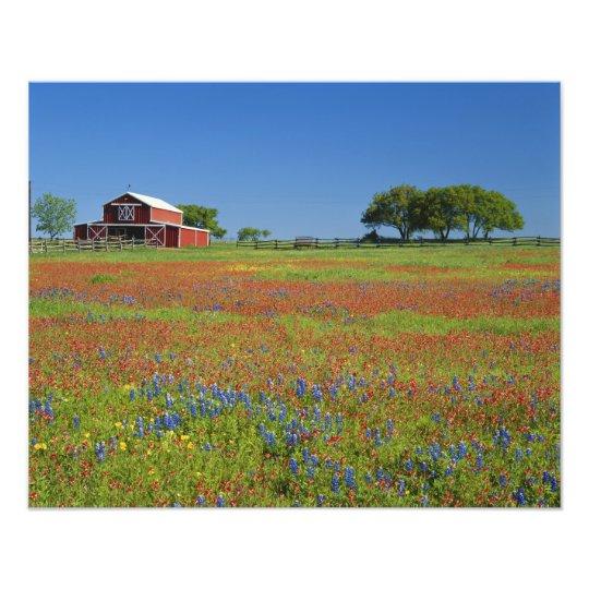 Texas, Texas Hill Country, Texas paintbrush Photo Print