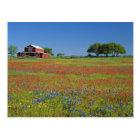 Texas, Texas Hill Country, Texas paintbrush Postcard