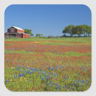 Texas, Texas Hill Country, Texas paintbrush Square Stickers