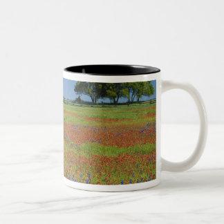 Texas, Texas Hill Country, Texas paintbrush Two-Tone Coffee Mug