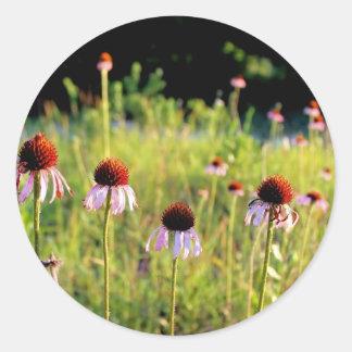 Texas Wildflower - Coneflower Classic Round Sticker
