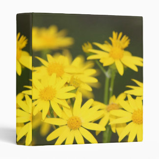 Texas Wildflower Early Spring Golden Ragwort Binders