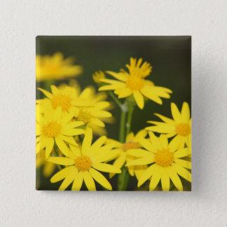 Texas Wildflower: Early Spring Golden Ragwort Button