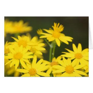 Texas Wildflower Early Spring Golden Ragwort Greeting Card