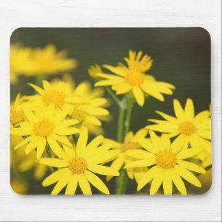 Texas Wildflower Early Spring Golden Ragwort Mousepad