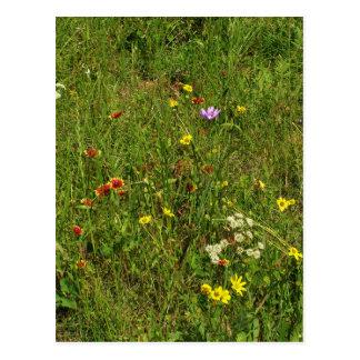 Texas Wildflower Field Postcard