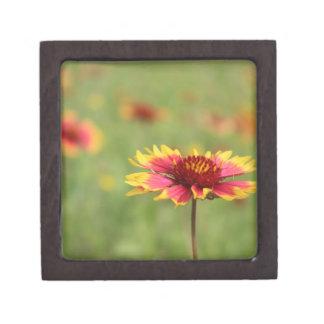 Texas Wildflower - Indian Blanket Flower gift box Premium Keepsake Boxes