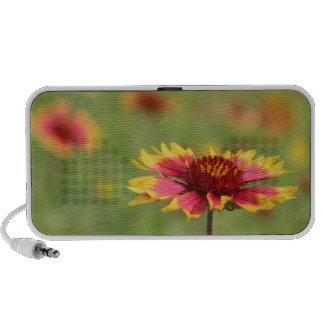 Texas Wildflower - Indian Blanket Flower - speaker