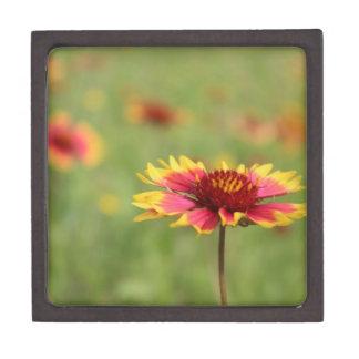 Texas Wildflower - Indian Blanket Premium Keepsake Boxes