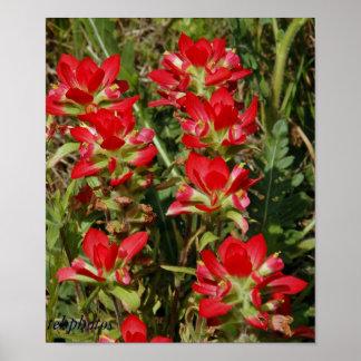 Texas Wildflower Poster