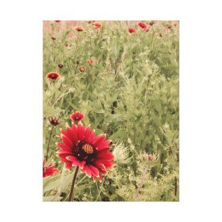 Texas Wildflowers Indian Blanket Canvas Print