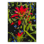 Texas Wildflowers Paintbrush Greeting Card
