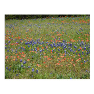 Texas Wildflowers Post Card