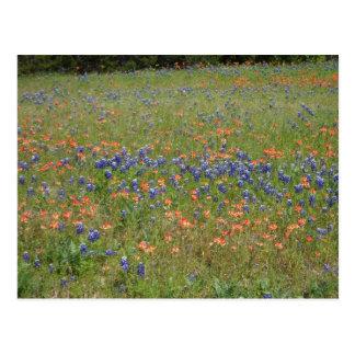 Texas Wildflowers Postcard