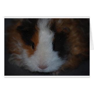 Texel Guinea Pig Card