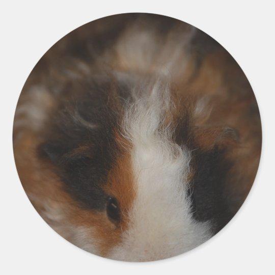 Texel Guinea Pig Classic Round Sticker