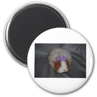 Texel Guinea Pig with bow 2 Inch Round Magnet