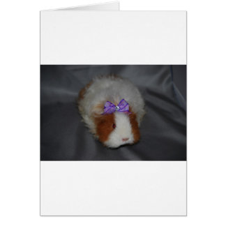 Texel Guinea Pig with bow Card