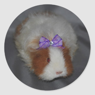 Texel Guinea Pig with bow Classic Round Sticker
