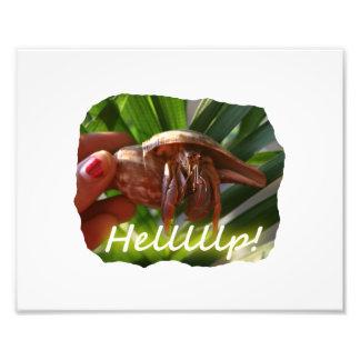 Texto de ayuda del cangrejo y de ermitaño diseño fotografía