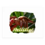 Texto de ayuda del cangrejo y de ermitaño, diseño  tarjeta postal