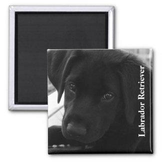 Texto negro del perrito del laboratorio imán cuadrado