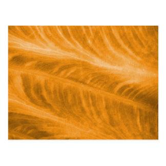 Textura anaranjada del oído de elefante postal