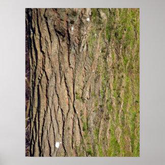 Textura de la corteza de árbol impresiones