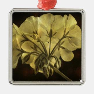 Textura de la flor del geranio ornamente de reyes