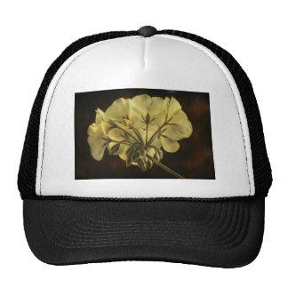 Textura de la flor del geranio gorra