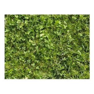 Textura de la hierba salvaje y del trébol postal