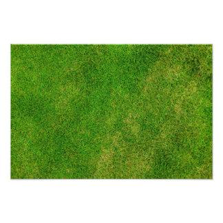 Textura de la hierba verde cojinete