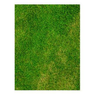 Textura de la hierba verde postal