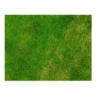 Textura de la hierba verde tarjeta postal