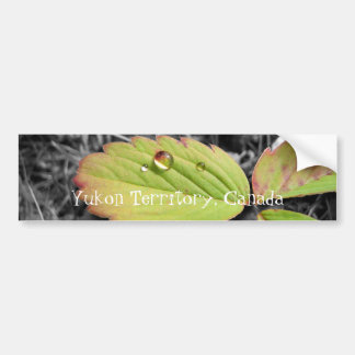 Textura de la hoja y gotita de agua; YT, Canadá Pegatina De Parachoque