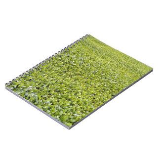 Textura de las hojas del verde libretas espirales
