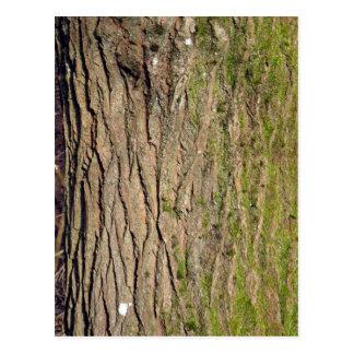Textura de madera cubierta de musgo verde tarjeta postal