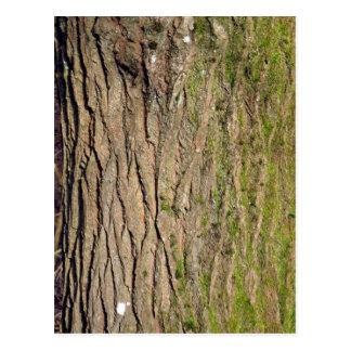 Textura de madera cubierta de musgo verde postales