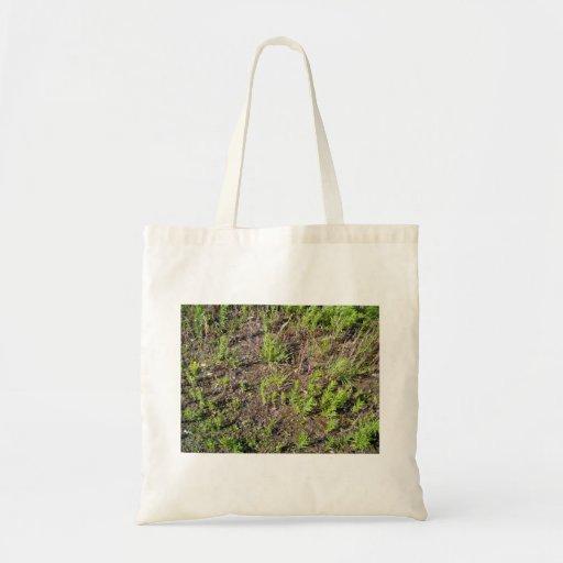 Textura de tierra de las plantas bolsas lienzo