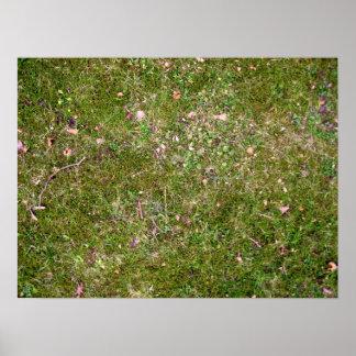 Textura de tierra herbosa poster
