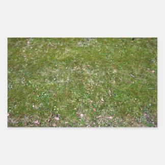 Textura de tierra herbosa pegatina rectangular