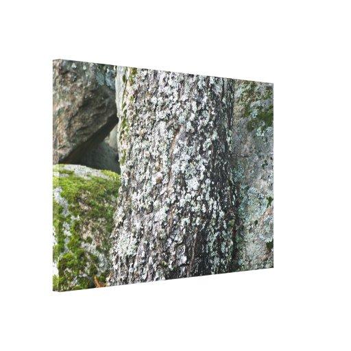 Textura del árbol de corteza con el liquen impresiones de lienzo