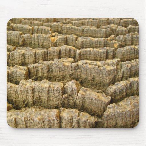 Textura del árbol tapete de ratón
