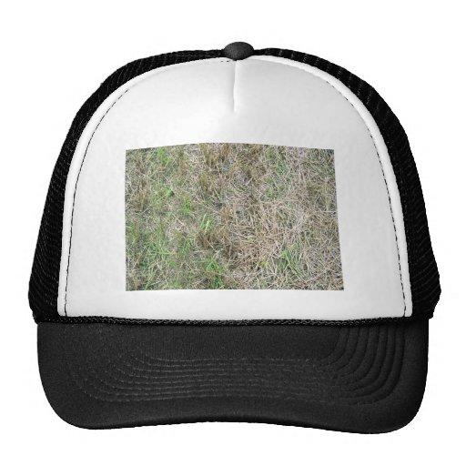 Textura del fondo de la hierba seca gorras de camionero