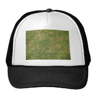 Textura fresca de la hierba verde gorra